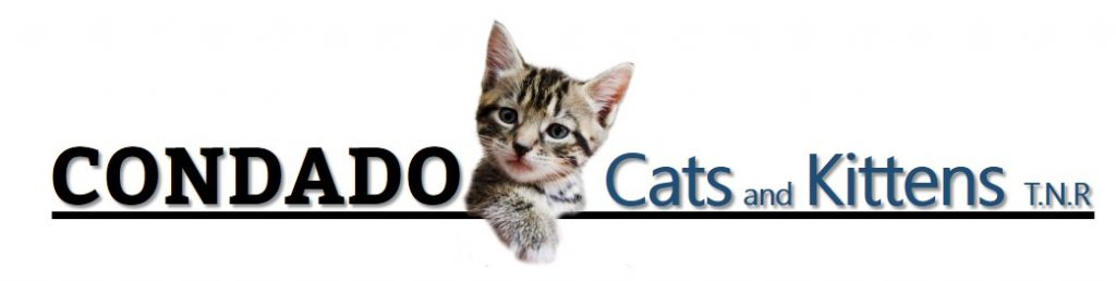 Condado Cats and Kittens T.N.R