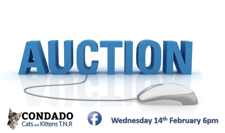 Condado Cats and Kittens Facebook Auction
