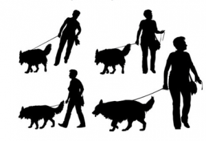 Dog Protocols and Actions