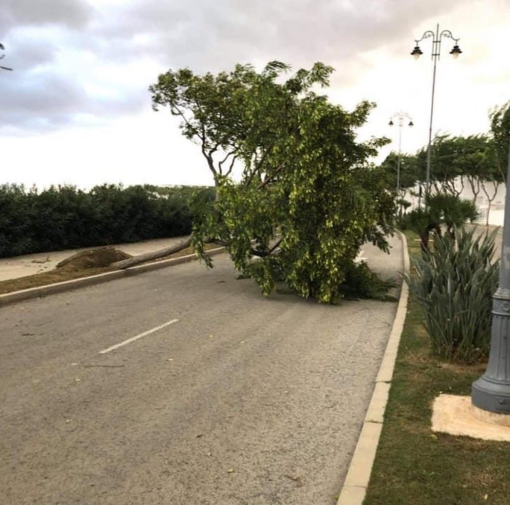 Fallen tree and branches block the road in the Jardines